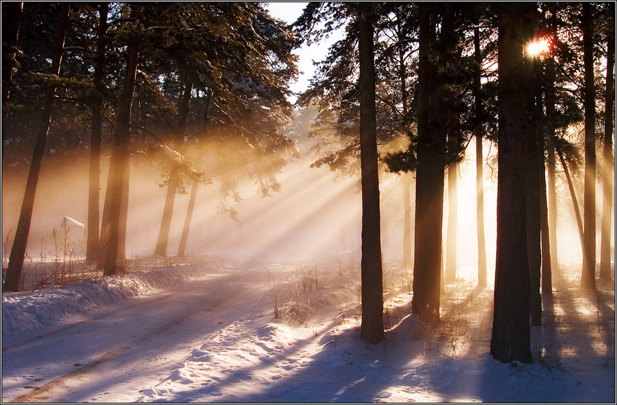 Winter light | snow, forest, beams, road, sun