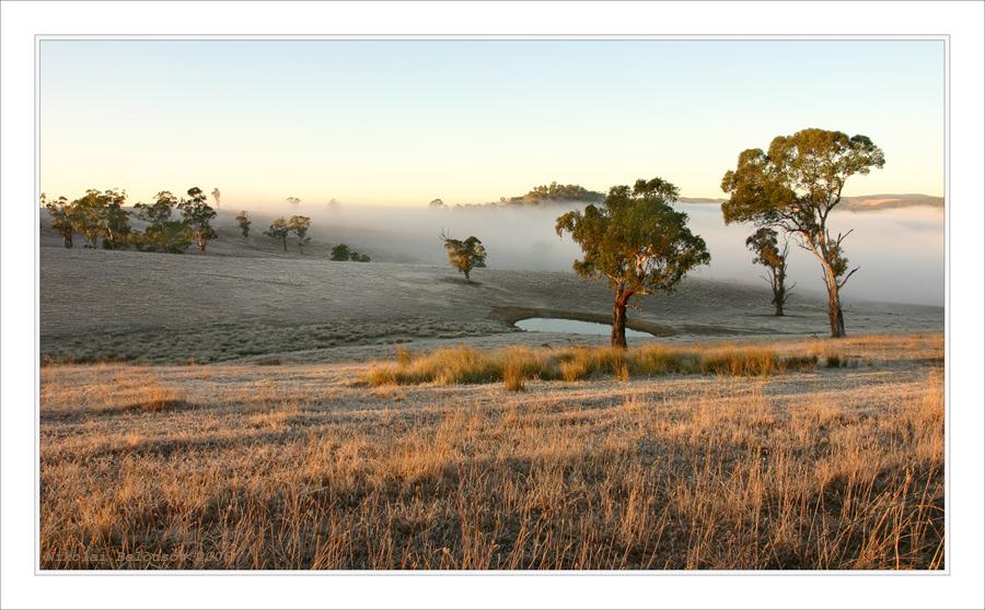 first frosts | fog, grass, field