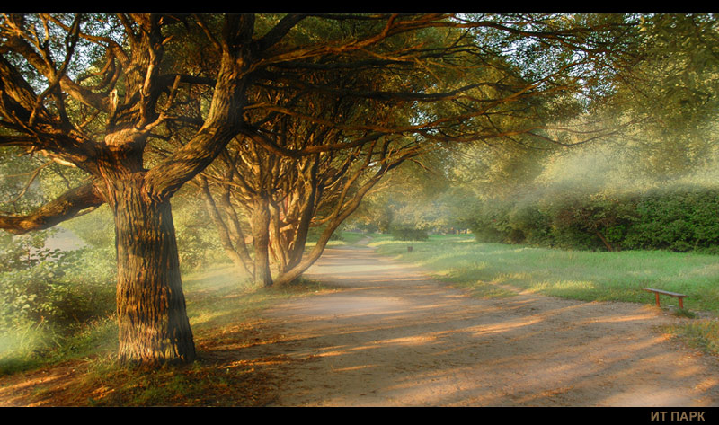 foggy morning iii | pathway, park, morning, fog, light