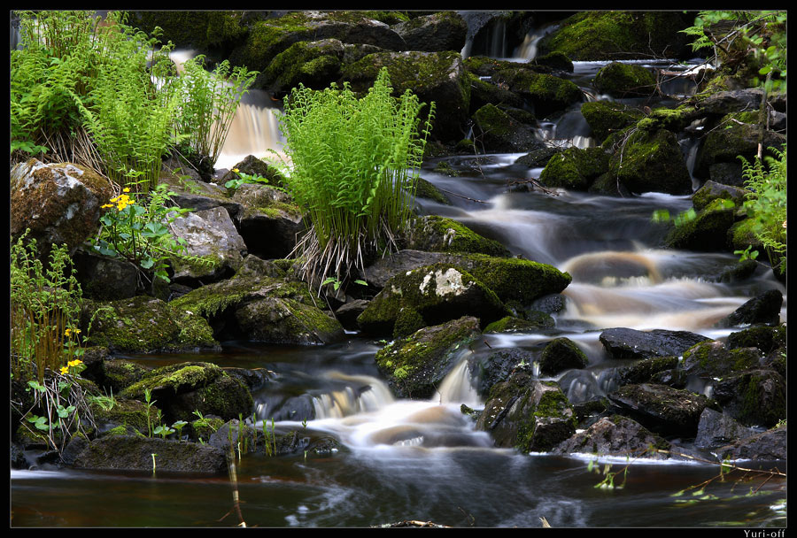 water, fern and stones | rocks, river, flowers, grass