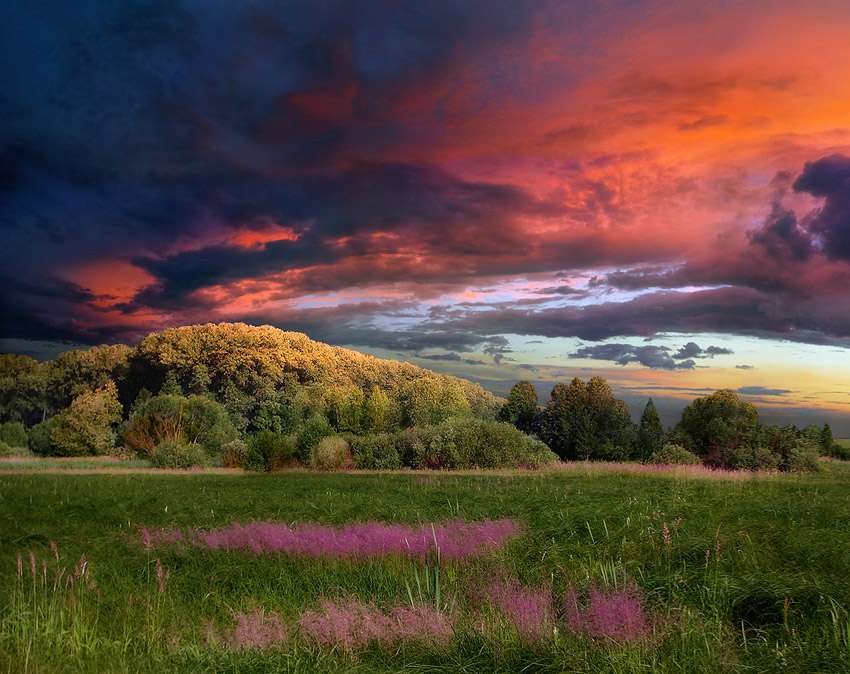 at sunset | dusk, sky, flowers, grass, forest