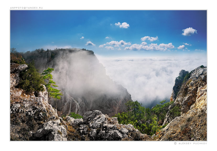 when the fog goes down from mountains | pine, clouds, fog, hdr, mountains
