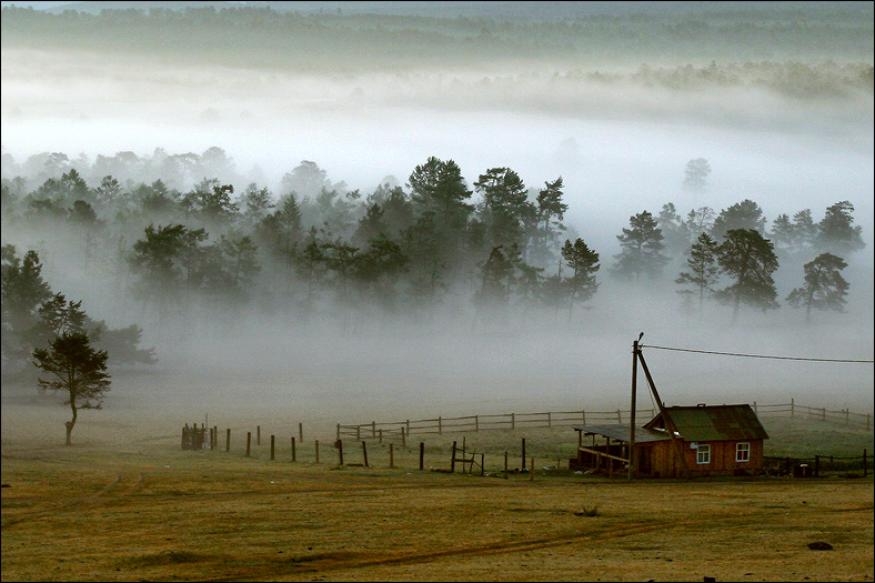 Fog above the forest | forest, field, mist, fog, house