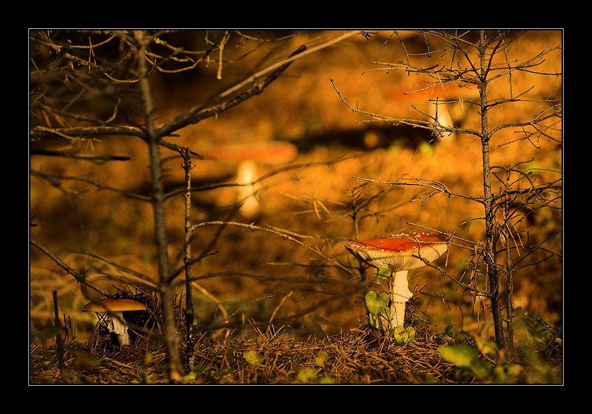 Is there life on Mars? | mushroom, forest, branches