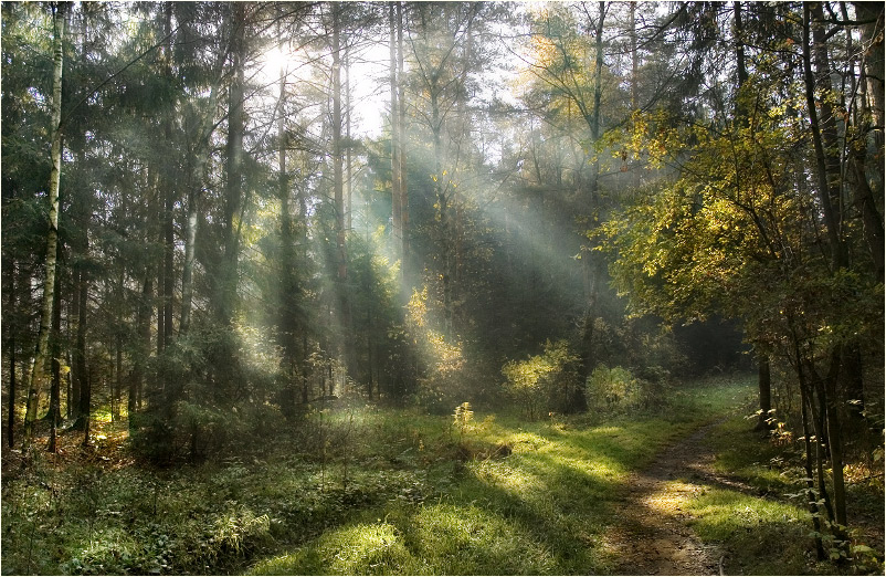 Evil Forest | light, beams, pathway, forest, autumn
