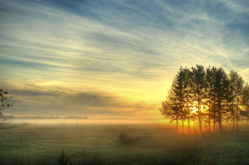 Gold of dawn... | field, dawn, fog, tree