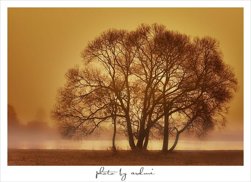 Etude in Autumn tinges | autumn, evening, trees, sepia, haze