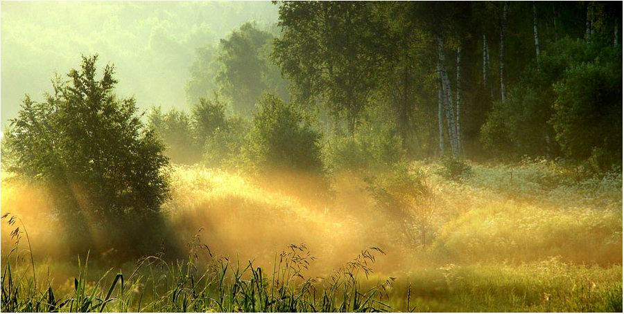 water meadows | meadow, sun, beams, forest, grass