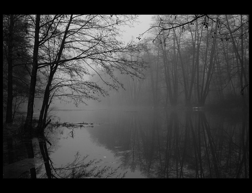 Fog in black and white | river, fog, wood, autumn, black and white