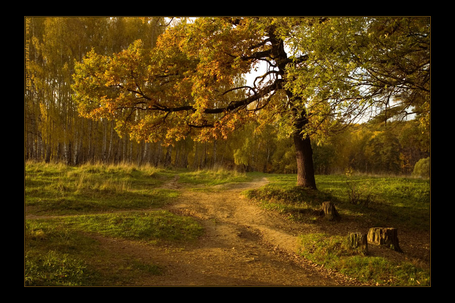 Remembering Golden September | leaves, grass, forest, pathway, autumn