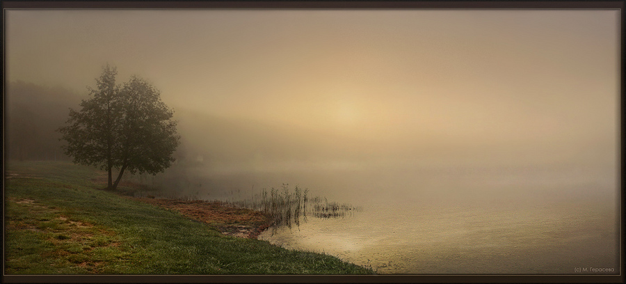 grief will pass, as morning fog | forest, rush, fog, lake