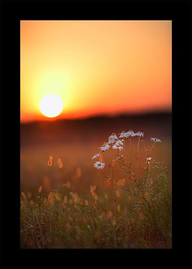 autumn, heat.   grass, evening, sun, flowers, autumn