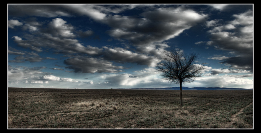 steppe | tree, clouds, rendering, steppe