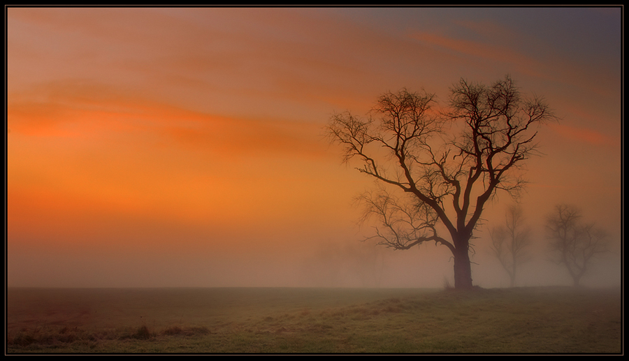 Fog | dawn, tree, field, silhouette, fog