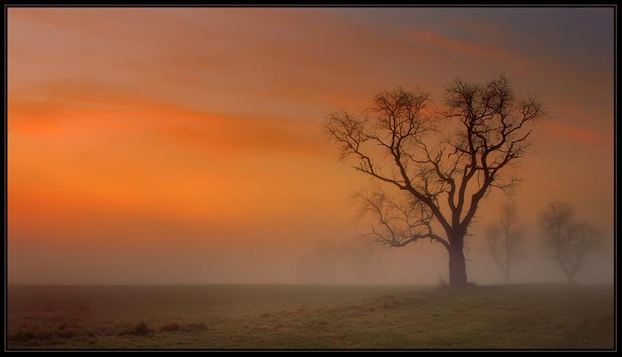 Fog | dawn, tree, field, silhouette, fog