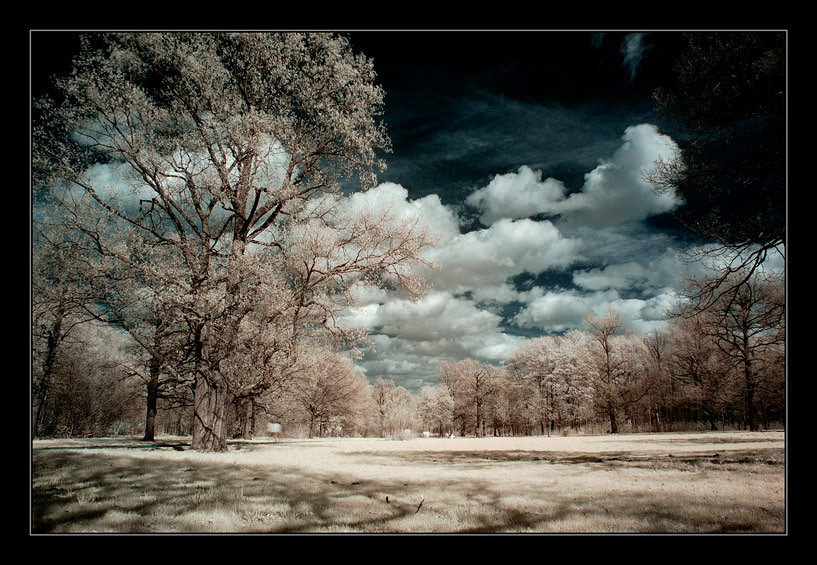 phenomenia | park, sky, clouds, infrared