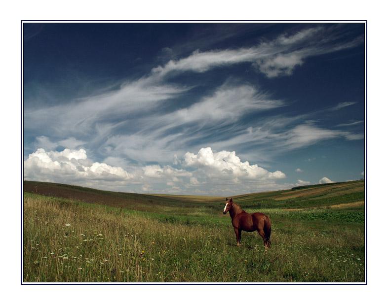 Red Horse & Magic Sky | animals, field, clouds, sky