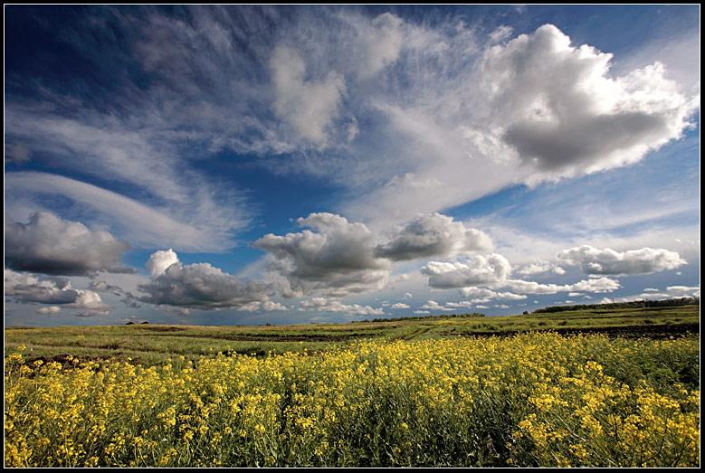 summer   summer, flowers, clouds, field