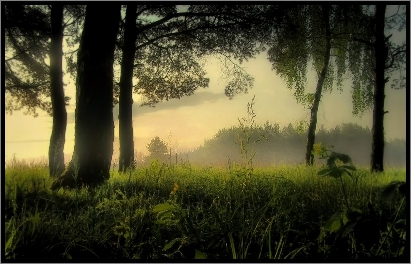 morning | morning, mist, forest, grass, river