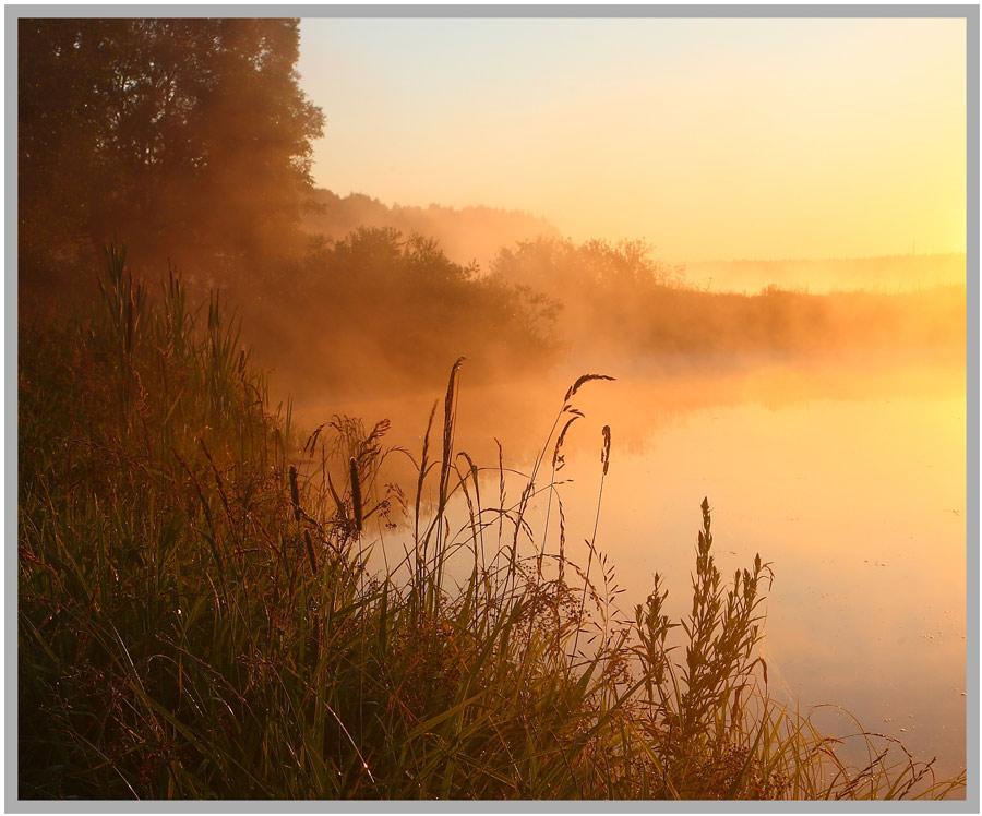 foggy morning  | rush, fog, grass, dawn, lake