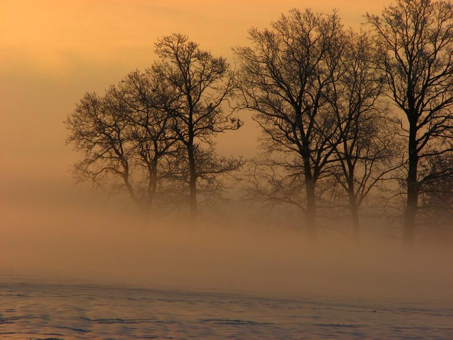 Fog over lake   morning, silhouette, lake, fog