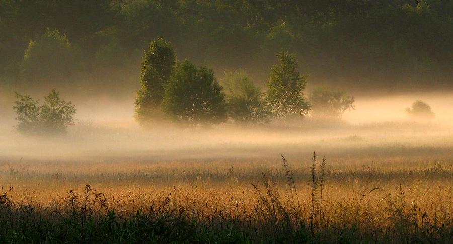 Morning field | mist, field, summer, grass