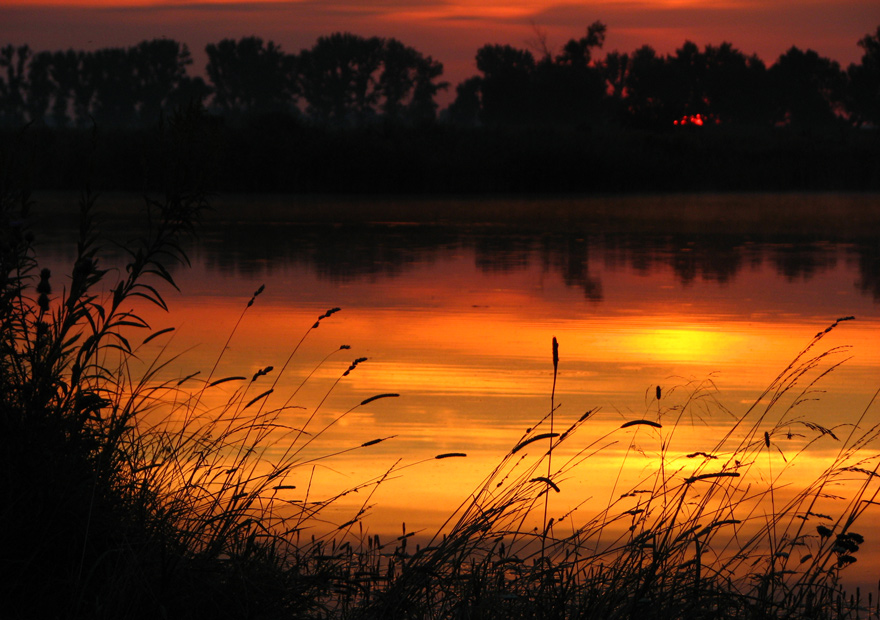 Evening   silhouette, dusk, lake, evening, rush