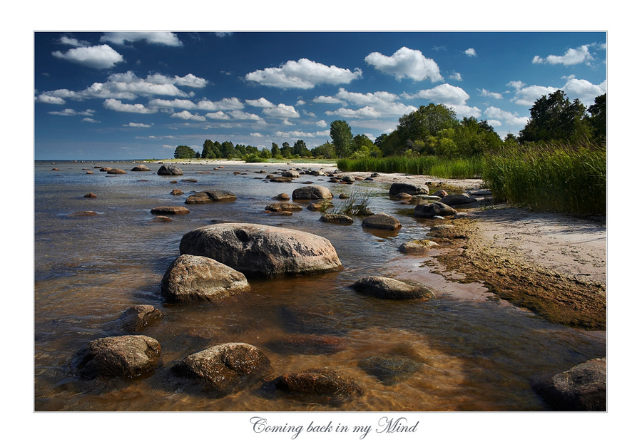 coming back in my mind | forest, rush, shore, rocks, river