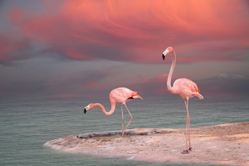 flamingo   morning, dawn, shore, sky, sea, animals, flamingo