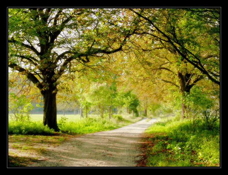 autumn's coming soon | hdr, pathway, park, green, summer