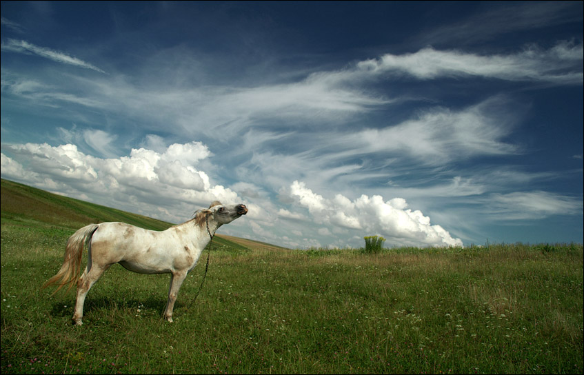 give me wings... i'd be pegasus... | horse, animals, clouds, grass, field