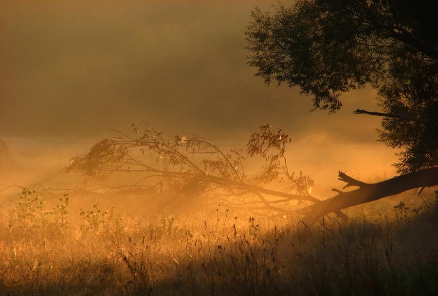 After the storm   sun, grass, tree, mist, evening