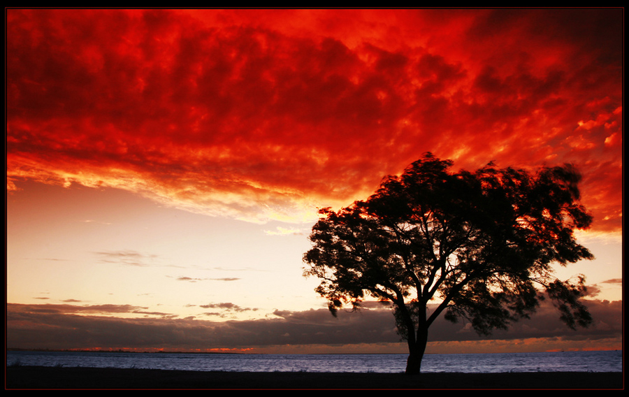 Storm's coming! | tree, sea, clouds, silhouette, dusk