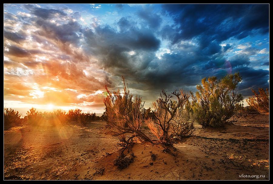 Sunset in saxaul grove | sky, clouds, dusk, desert, bush
