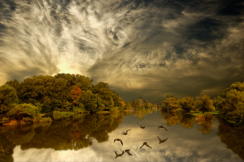 Flying ducks | autumn, hdr, forest, ducks, river