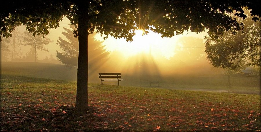 fog on september.. 2 | park, fog, morning, sun, bench