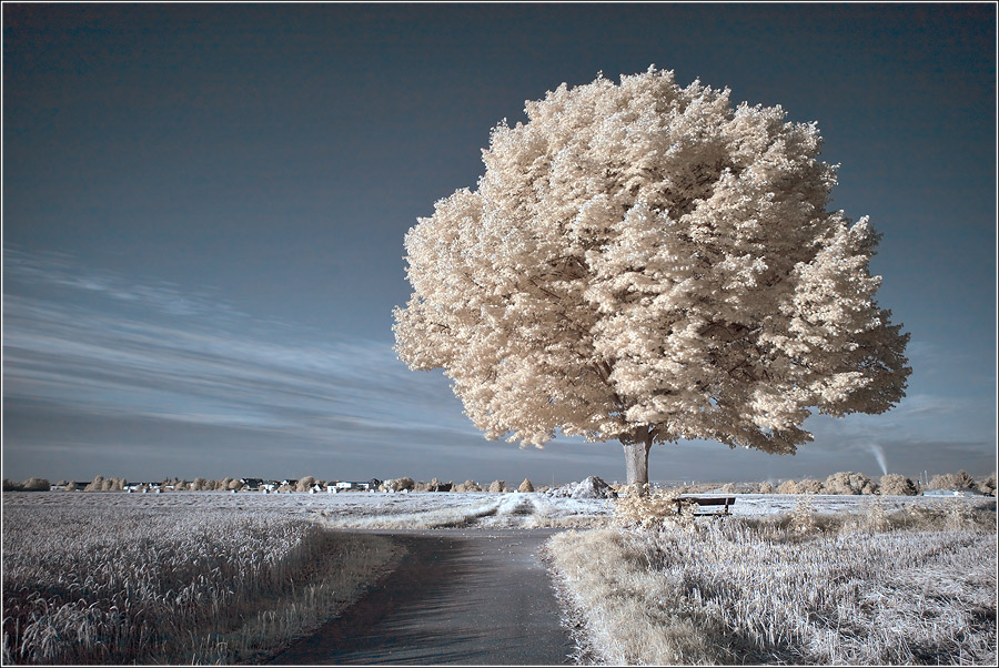 Infrared | road, field, infrared, tree