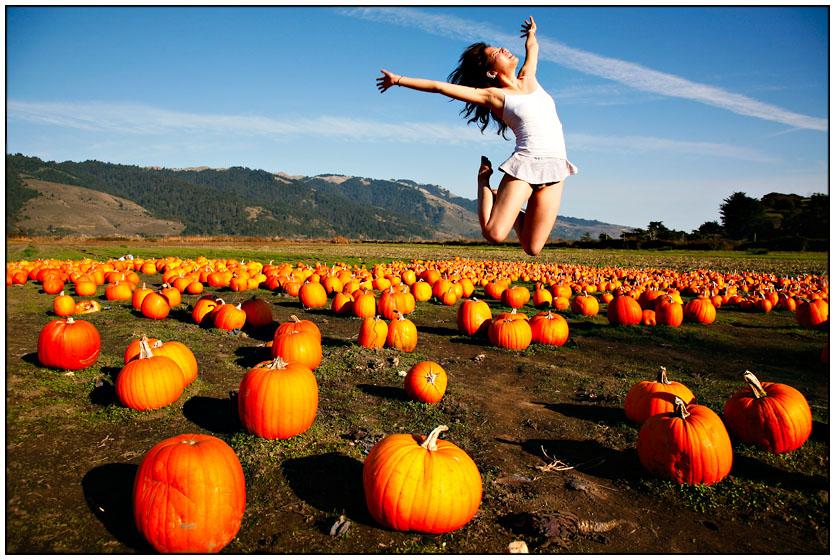 Pumpkin Day | pumpkin, hills, field, holiday