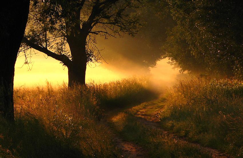 Evening sun | pathway, forest, sun, evening