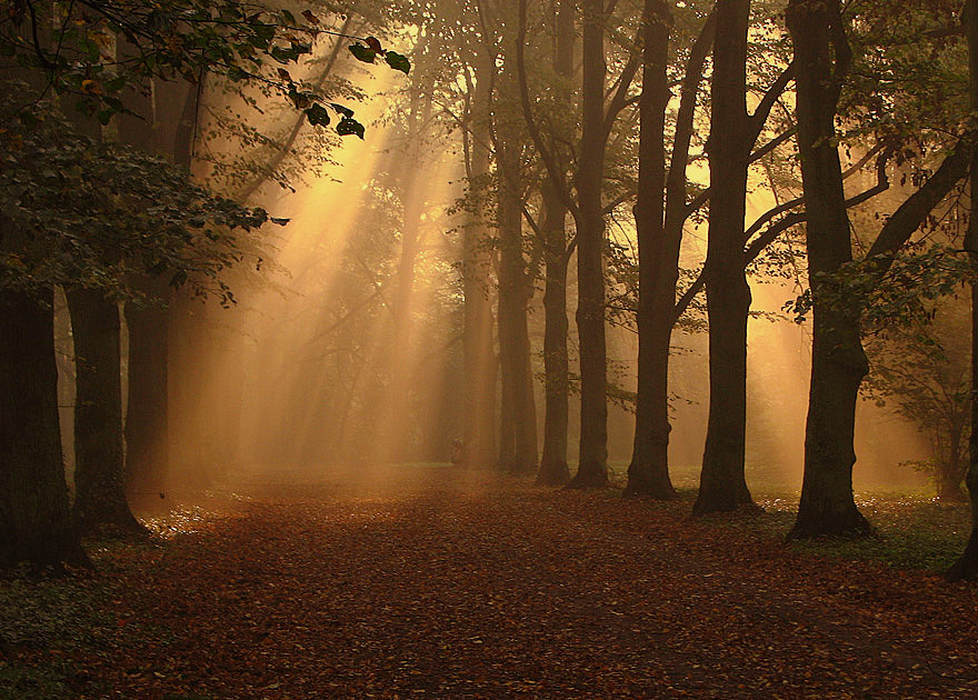 Morning in the park | park, alley, leaves, sun, pathway