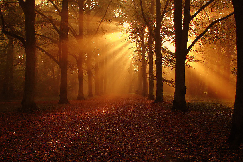 Morning | pathway, leaves, sun, park, alley