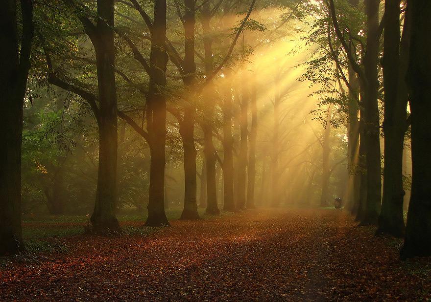Sunbeams | pathway, sun, alley, park