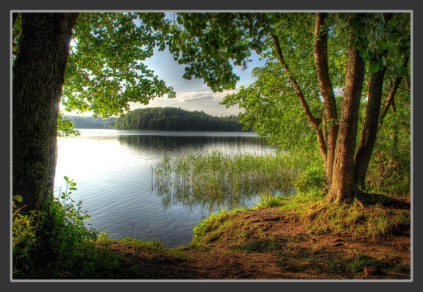Evening On the Lake | lake, water, evening, trees, shore
