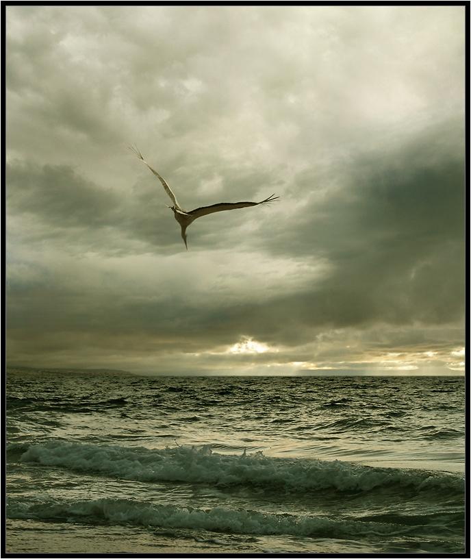 Ikaros | fly, bird, clouds, море, sky