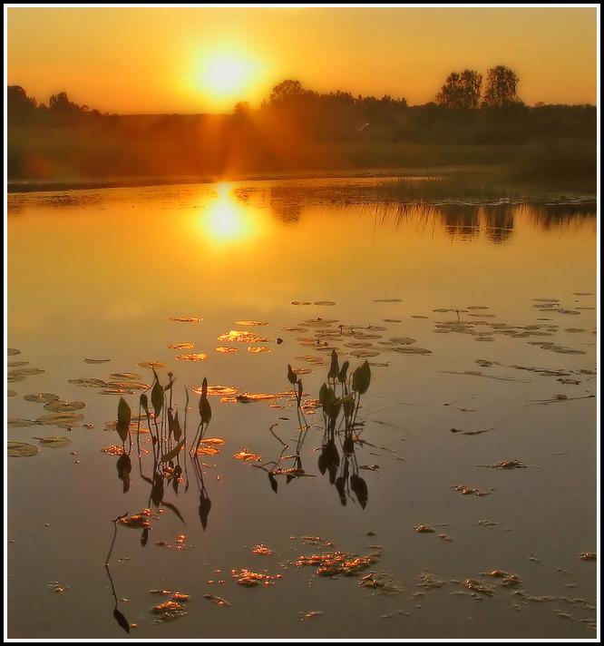 Sun on the water silk | sun, coast, water, river, rising, dawn