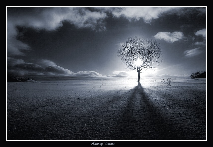 The Tree of Knowledge | cold, light, winter, tree, shadow