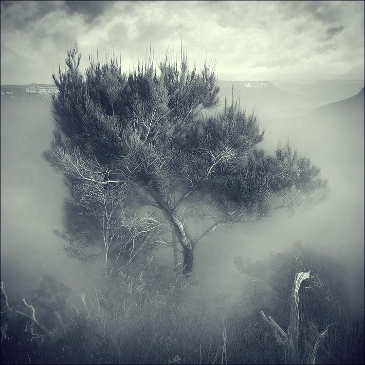 Mist   duotone, tree, fog, clouds