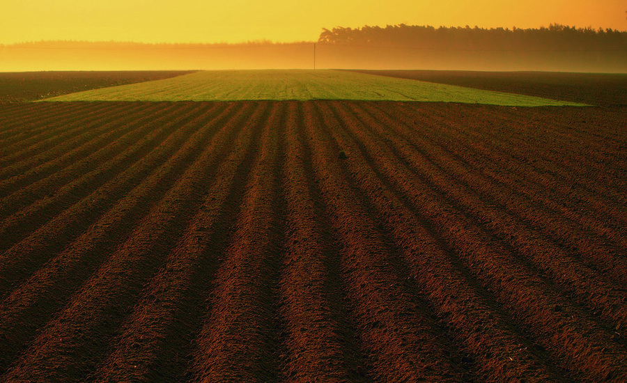 plough-land | field, dawn, plough-land