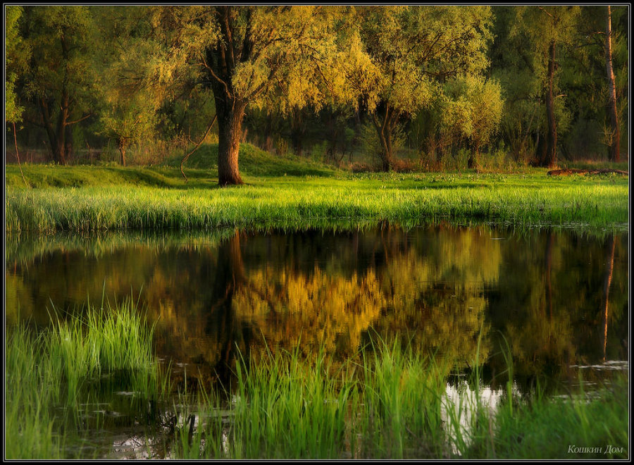easter morning... | rush, forest, lake, reflection