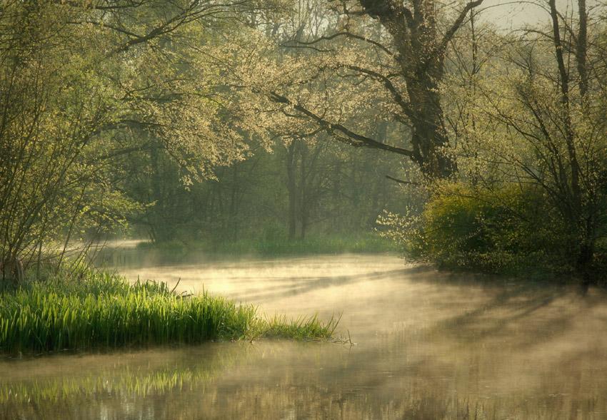 Rush   rush, lake, fog, morning, spring